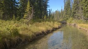 Bogental-Banff-Fluss Stockbilder