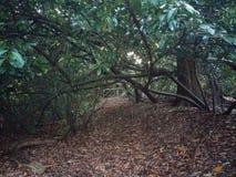 Bogenweise des Baums stockbild