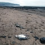 Boggle hole North Yorkshire coast England Royalty Free Stock Images