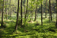 Boggy forest stock images
