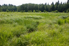 Boggy meadow. (Wigry National Park in Poland Stock Images