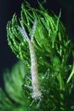 Boginka dragonfly na roślinie wodnej zdjęcie stock