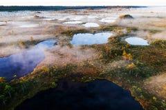 Bogland no parque nacional de Soomaa imagens de stock royalty free