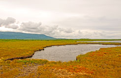 Boglands on a Cloudy Day Royalty Free Stock Photography