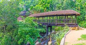 The bridge on the tree trunk, Sri Lanka Stock Photos