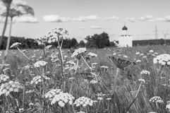 Monichrome image. View through Bogolubovo meadow towards the Church of the Intercession of the Holy Virgin on the Nerl River. Bogolyubovo meadow has rich and Royalty Free Stock Photo