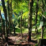 Bogor indonesia Arkivfoto