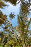 Bogota palmy i tropikalne rośliny z niebieskim niebem obraz stock