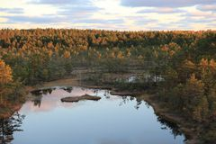 Bogs at sunrise Stock Photo