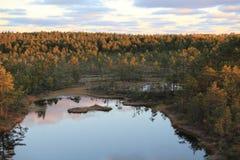 Bogs at sunrise Stock Photo