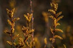 Bogscapes en primavera Foto de archivo libre de regalías