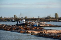 Bogserbåtfartyg som arbetar på journalbang Royaltyfria Bilder