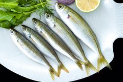 Bogue fish also known as Boops boops with rockets leaves served on white plate royalty free stock photography