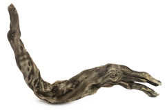 Bogwood или driftwood Стоковое Фото