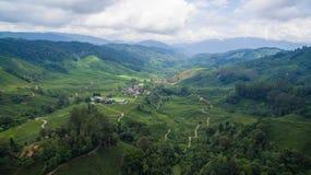 BOH herbaciana plantacja w Cameron średniogórzu Zdjęcie Stock
