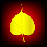 Boh Leaf Royalty Free Stock Image