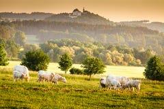 Bohemian dawn landscape Royalty Free Stock Image