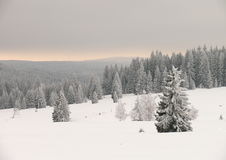 Bohemian Forest. Winter scene in Czech republic -  beautiful landscape covered with snow Royalty Free Stock Photo