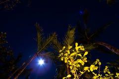Bohemian Moon & Trees Night Sky. Really Bright moon NightSky with stars and trees Stock Images