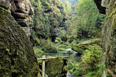 Bohemian Switzerland deep forest valley Stock Images