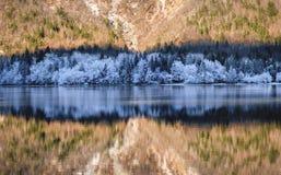 Bohinj湖冬天 库存照片