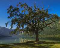 Bohinj湖 免版税库存图片