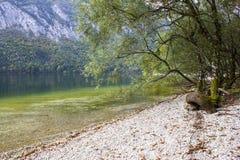 Bohinj jezioro, Slovenia Fotografia Stock