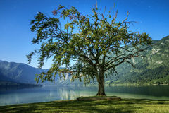 Bohinj Lake Royaltyfria Bilder