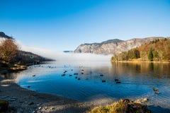 Bohinj Lake Stock Photography