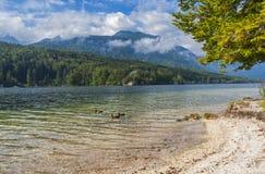 Bohinj sjö, Slovenien Arkivfoto