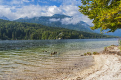 Bohinjmeer, Slovenië Stock Foto