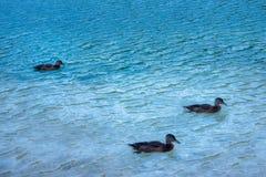 Bohnij Lake in Slovenia Royalty Free Stock Photos