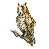 Boho, Great Horned owl bird on branch isolated, watercolor illustration Stock Photo