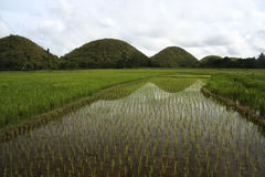 Bohol chocolate hills rice fields philippines Royalty Free Stock Photo