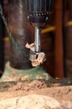 Bohrgerätpresse mit einem forstner Bit angebracht Lizenzfreies Stockfoto