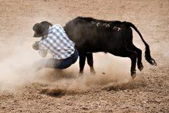 Boi que wrestling Fotografia de Stock