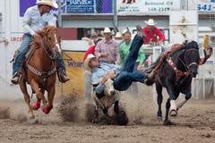 Boi que Wrestling - irmãs de PRCA, rodeio 2011 de Oregon Imagem de Stock