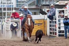 Boi que Wrestling - irmãs de PRCA, rodeio 2011 de Oregon Fotografia de Stock Royalty Free