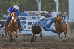 Boi que Wrestling - irmãs, rodeio 2011 de Oregon Fotografia de Stock Royalty Free