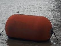 Boia da flutuação fotografia de stock