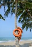 Boia de vida na árvore de coco Fotografia de Stock