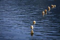 Boia do mar de Yelow Fotos de Stock
