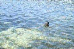 Boia na superfície do mar raso fotos de stock royalty free