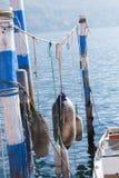 Boia que penduram em cordas nos polos de madeira brancos e azuis em típico Fotos de Stock Royalty Free