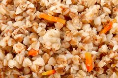 Boil buckwheat with carrot. Closeup detail background royalty free stock photos