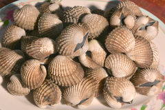 Boil Cockle Stock Images