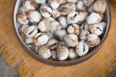 Boil cockle in dish. Selective focus royalty free stock photography