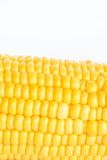 Boil corn close-up. Boil corn on white background stock photography