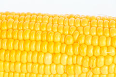 Boil corn close-up. Boil corn on white background royalty free stock photo