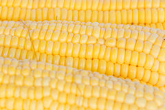 Boil corn Royalty Free Stock Photography